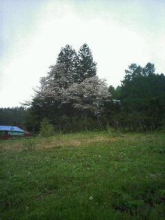 2007-05-17_07-540001.jpg